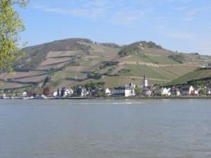 Le bord du Rhin : c'est beau !  Attention : Vignes en pente !